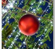 Christmas at Citta Mall