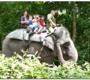 Elephant ride in Singapore