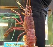 Bali Hai Lobster Promo_2