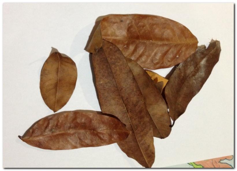 fox leaf craft_1