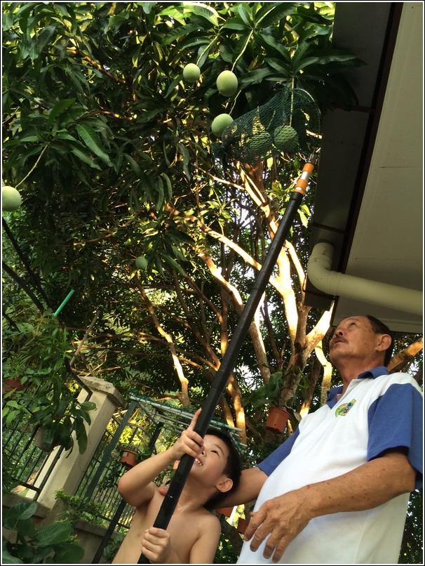 Home grown mango