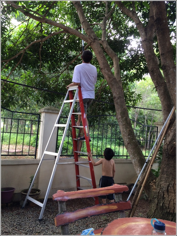 plucking mangoes with grandpa