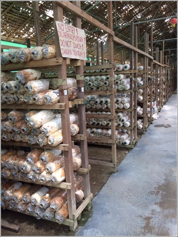Mushroom farm Genting