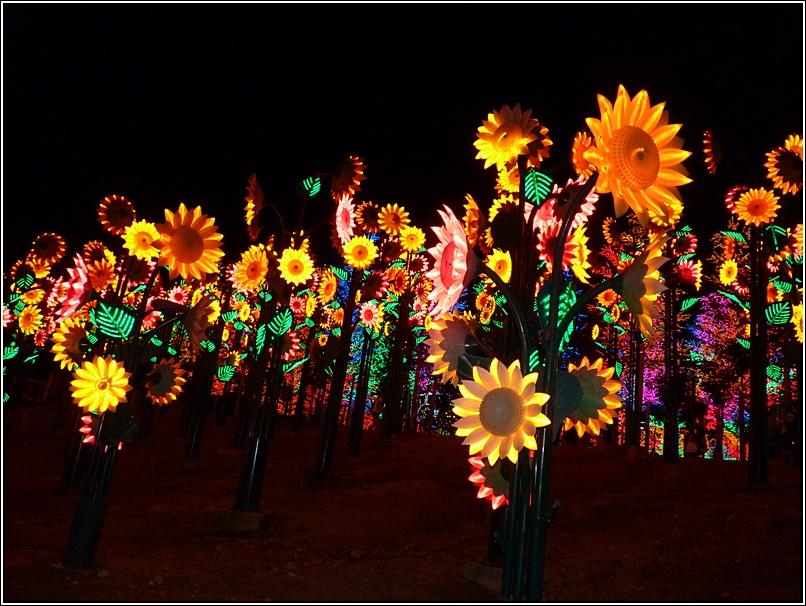 i-City Sunflowers