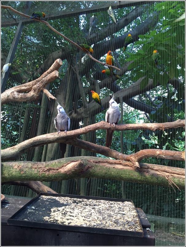 SUnway Lagoon Wildlife Bird