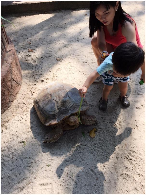 Sunway Lagoon Pet Village Feeding Giant Tortoise