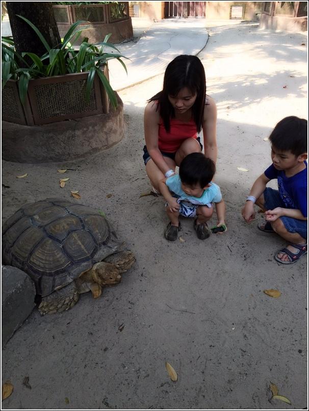 Sunway Lagoon Pet Village Giant Tortoise 1