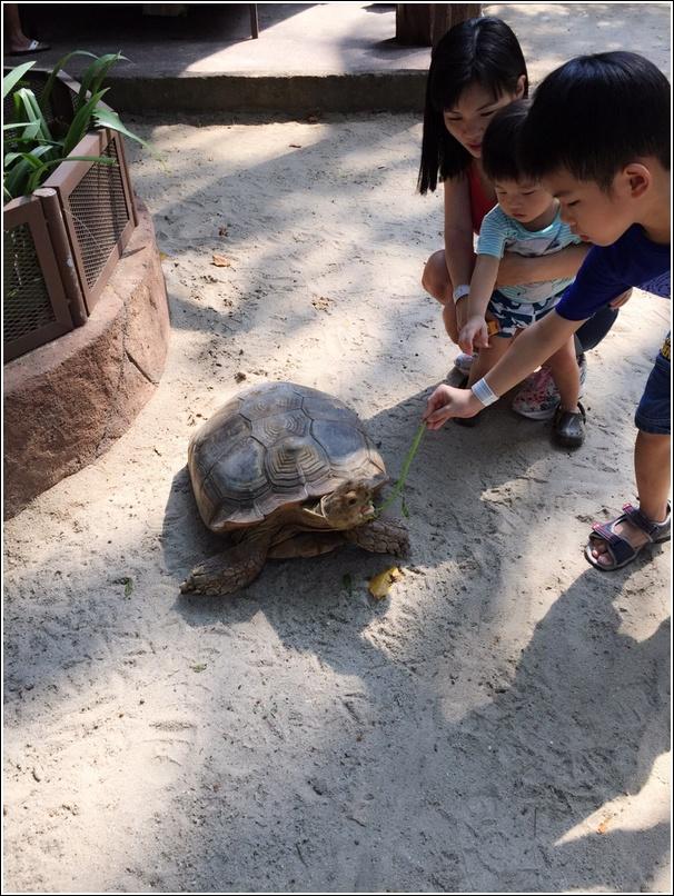 Sunway Lagoon Pet Village Giant Tortoise