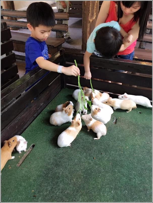 Sunway Lagoon Pet Village Hamster