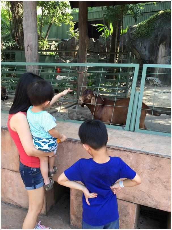 Sunway Lagoon Wildlife Goat