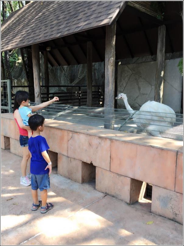 Sunway Lagoon Wildlife Ostrich