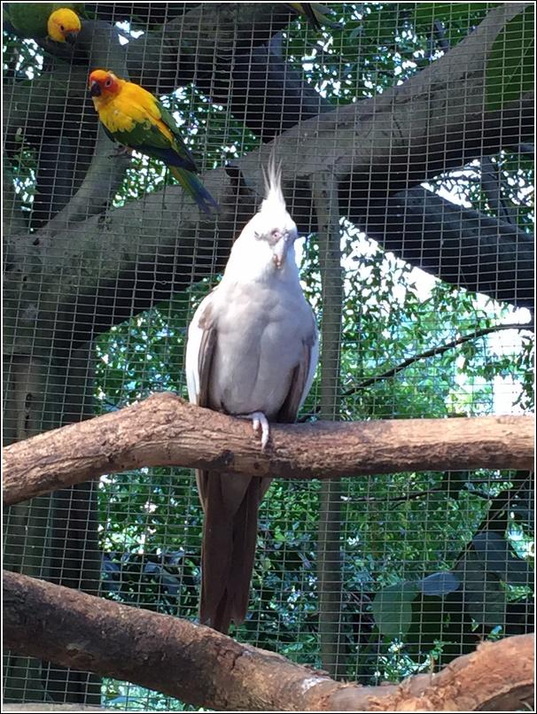 Sunway Lagoon Wildlife Park Bird