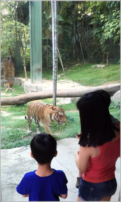 Sunway Lagoon Wildlife Park Tigerland 1