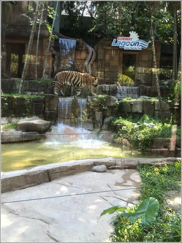 Sunway Lagoon Wildlife Park Tigerland 2