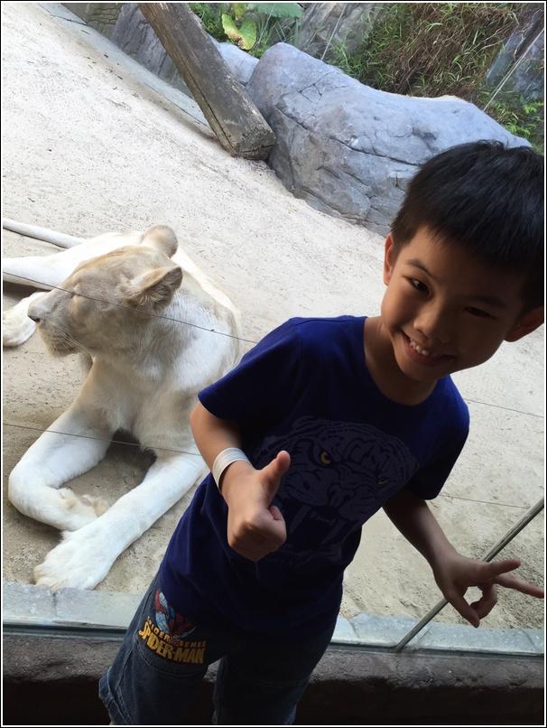 Sunway Lagoon Wildlife Park White Lion 2