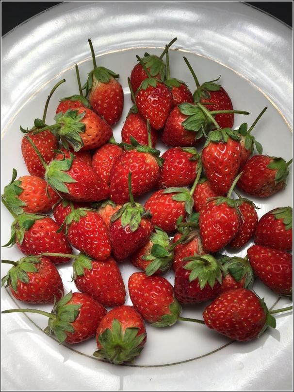 Frozen Strawberry Yogurt Popsicle 2