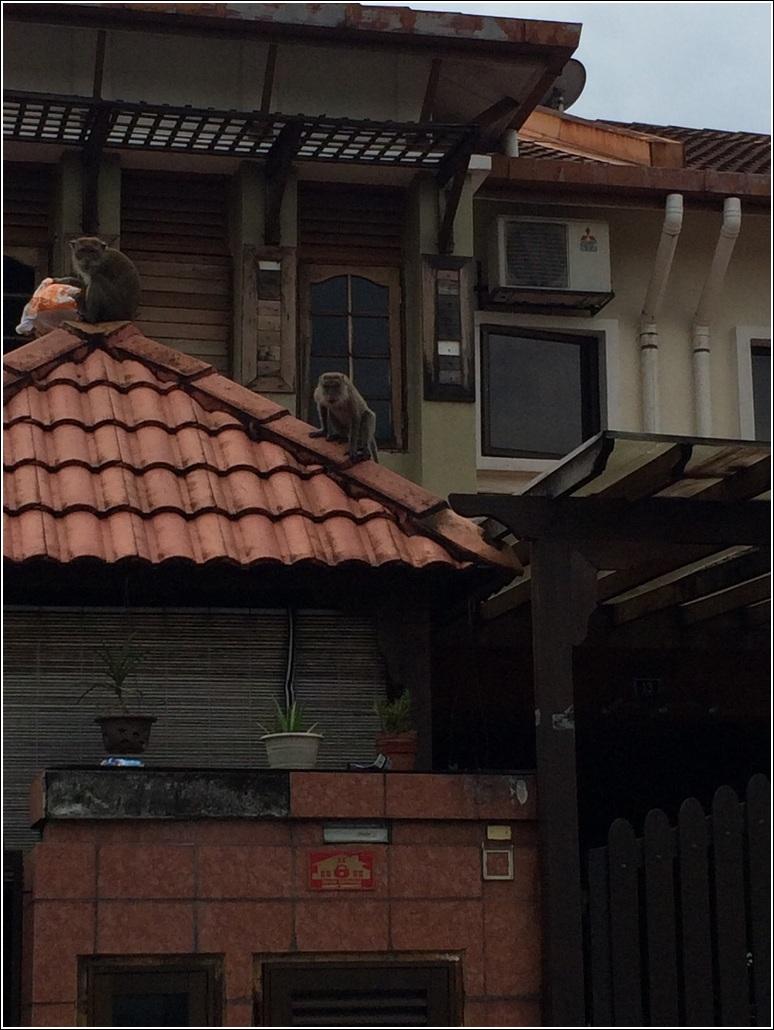 Monkey in the neighbourhood