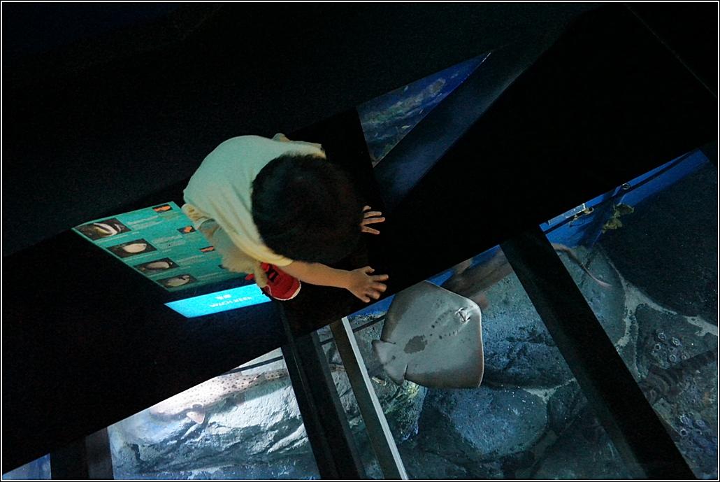 S e a aquarium sentosa singapore home is where my heart is for Floor aquarium