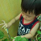 homegrown-organic-adzuki-red-bean-1