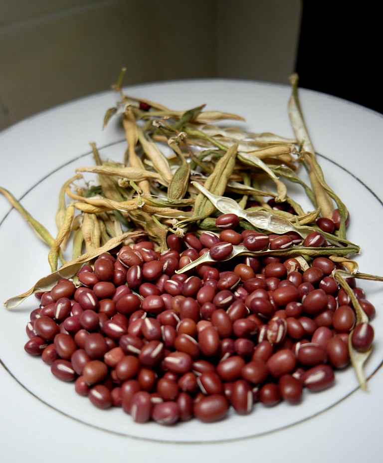 homegrown-organic-adzuki-red-bean-7