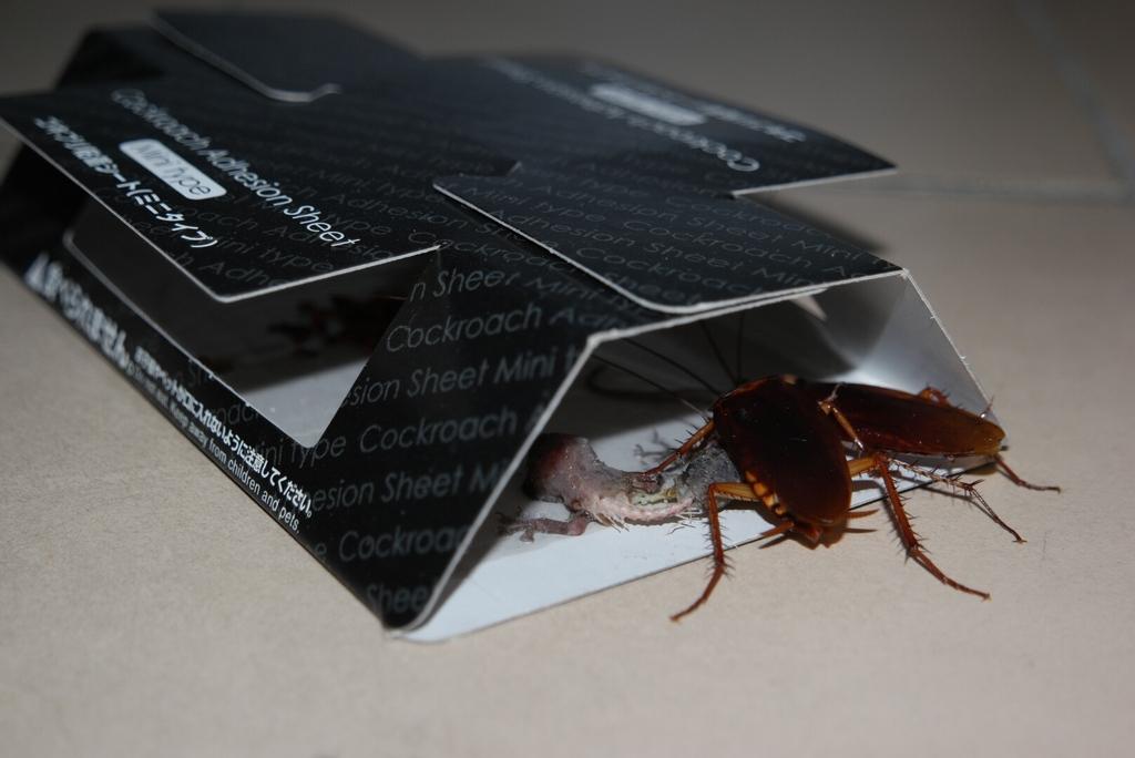 cockroach-trap